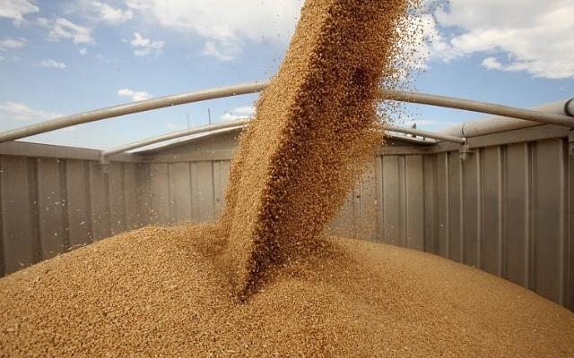 image14030772 b26a8ee95d015c1baa24bb6a4a93598b 4 0 - Экспорт пшеницы в Турцию разрешён