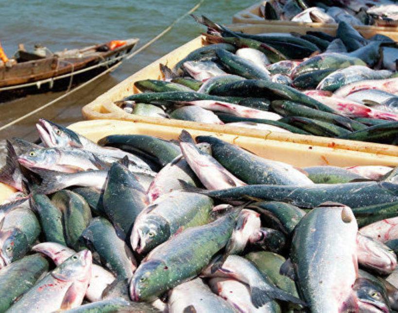 93400 n82214769 819x644 - Великобритания выходит из международного договора по рыболовству