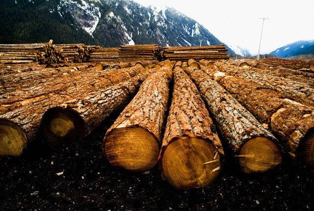 2767633 1 - Минимущество Крыма приглашает принять участие в аукционах по продаже древесины