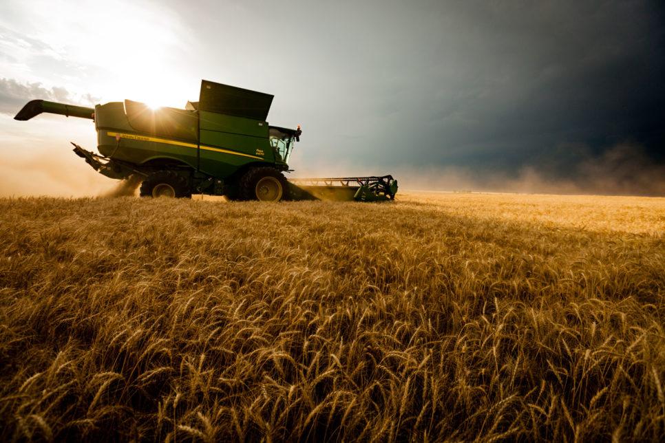 harvesting wheat 1 966x644 - Страхование аграриев