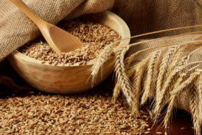 bugda 283x189 - Пошлина на ввоз пшеницы