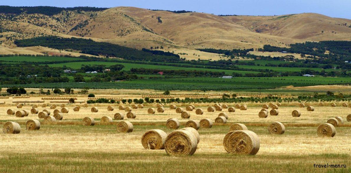 хозяйство Австралии 1190x586 - Развитие сельского хозяйства