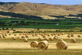 Сельское хозяйство Австралии 283x189 - Развитие сельского хозяйства