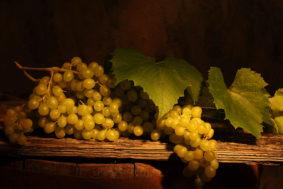 nastol.com .ua 40210 283x189 - Поддержка виноделия