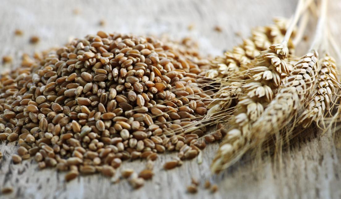 whole grain 1104x644 - Импорт зерна